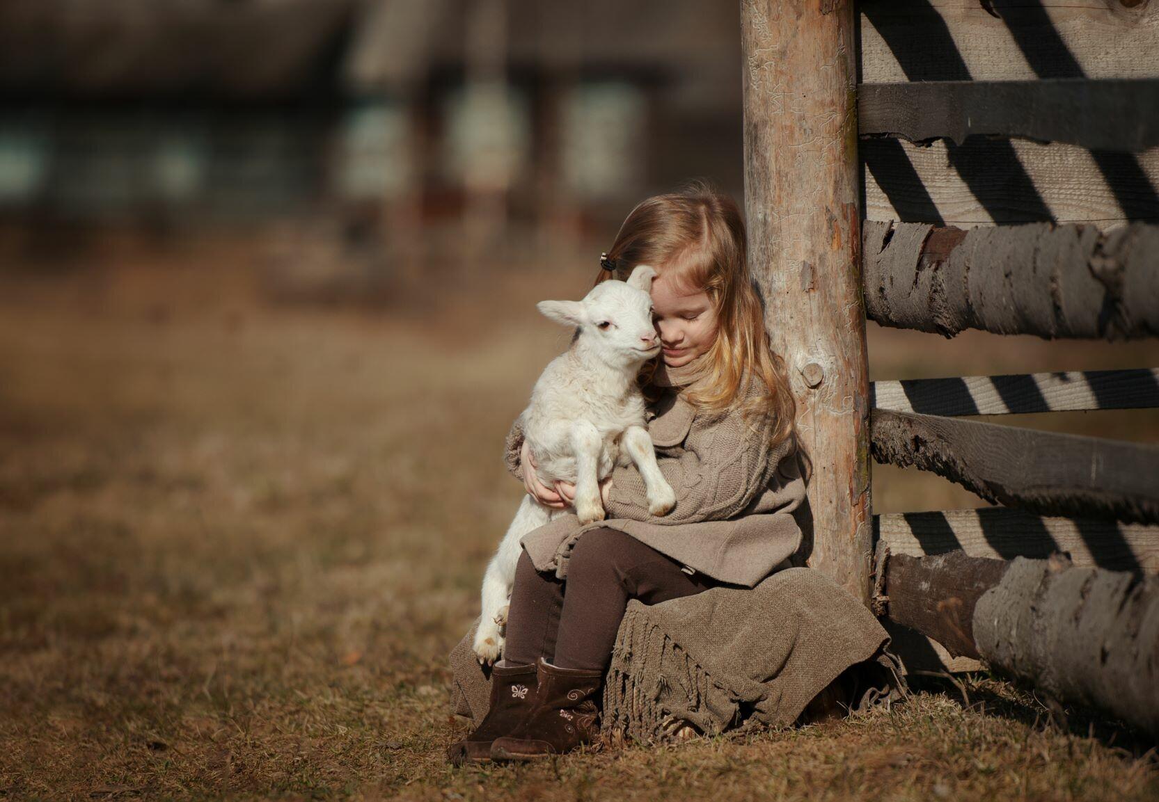 Girl with lamb sheep