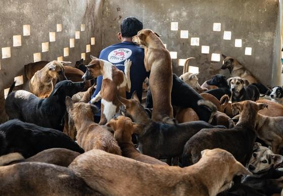 Gerettete Hunde Kambodscha