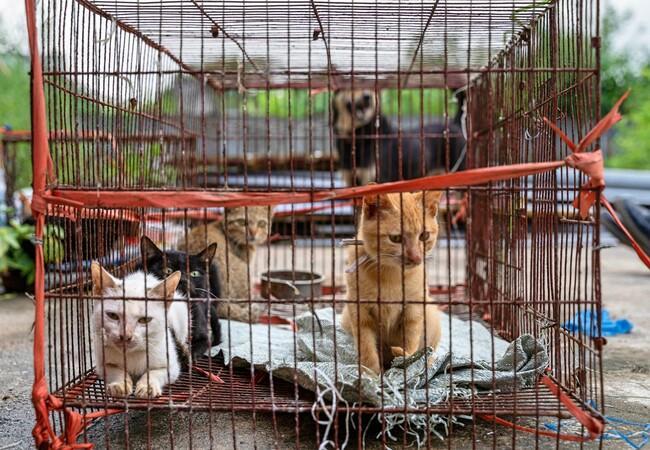 Viele Katzen in kleinem Käfig