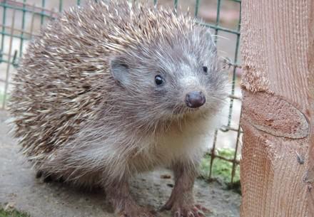 VIER PFOTEN, FOUR PAWS, Ausatria, Haringsee, 2017, EGS, bird, hedgehog, curious, enclosure,