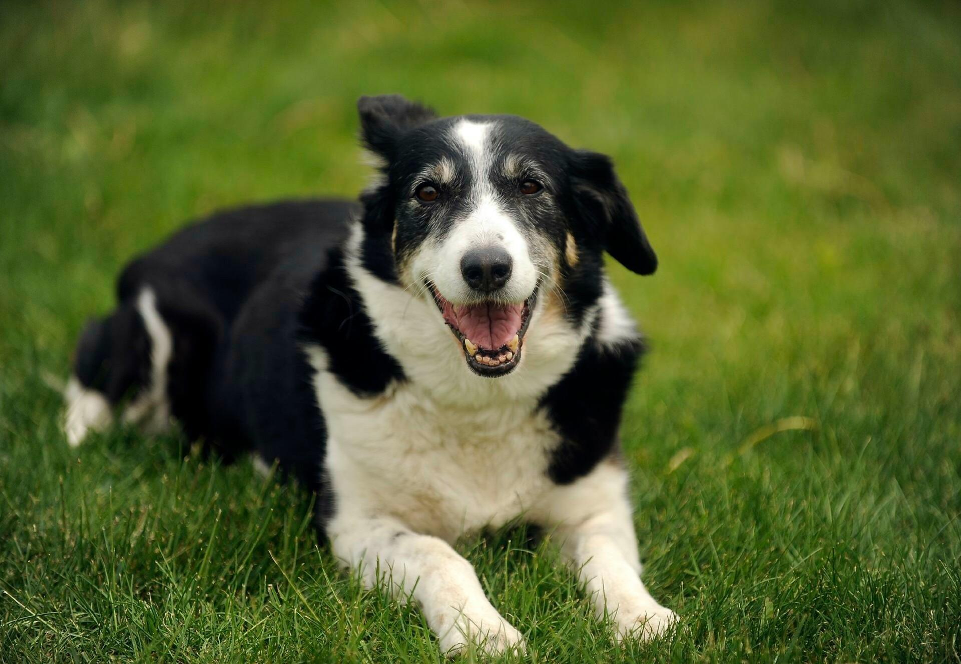 Hond in gras