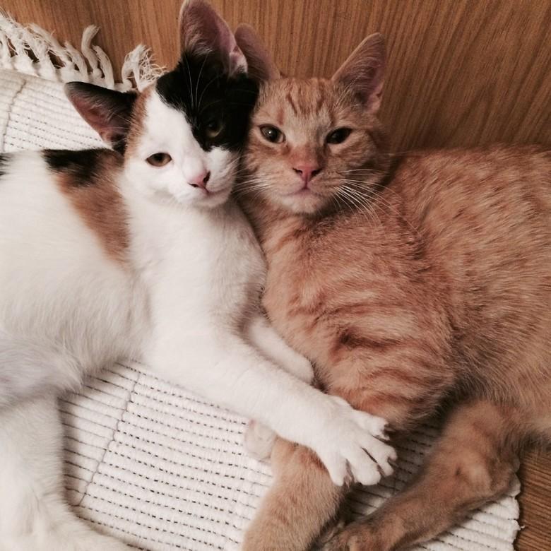 Zwei Katzen beim Kuscheln