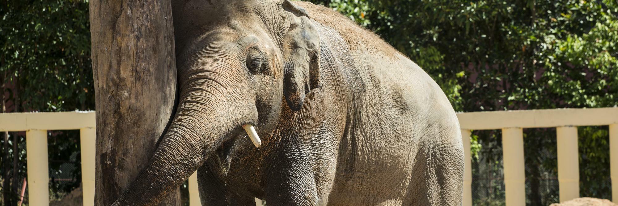 Kaavan, world's loneliest elephant