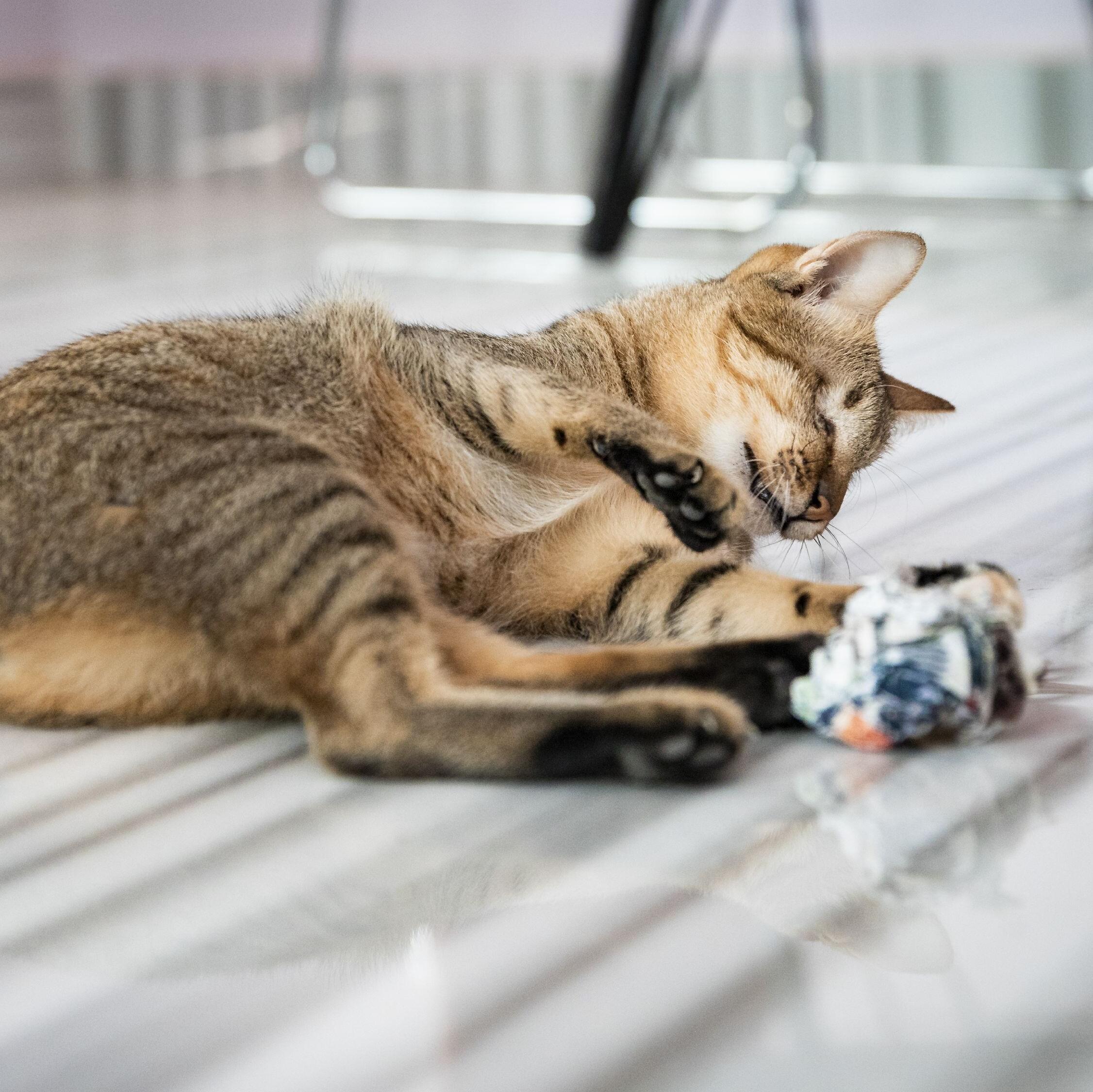 Vorbild an Lebenswillen: Die blinde Katze Mina