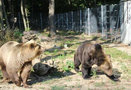 Rescue Leo and Melanka