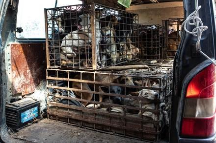 Dix millions de chiens et de chats sont abattus chaque année en Asie du Sud-Est
