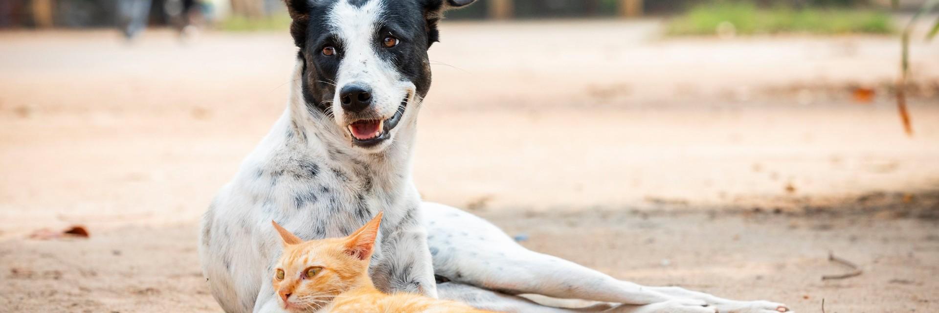 Un chien et un chat errants