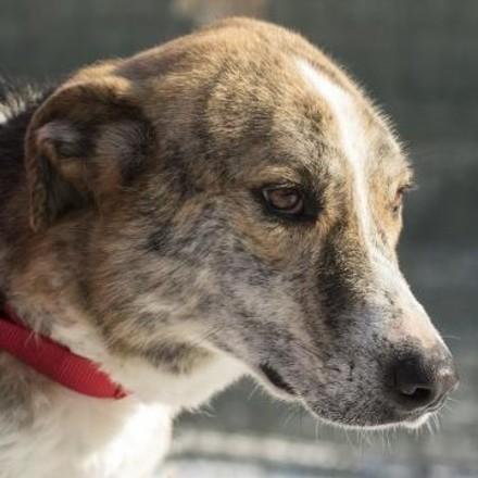 куче Малчо Лея (Dog Malcho Lea)