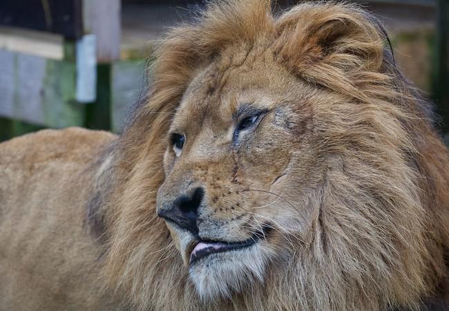 Lion Lenci in 2020
