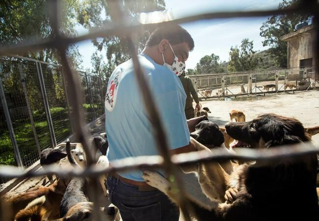 Mitarbeiter mit hungernden Hunden
