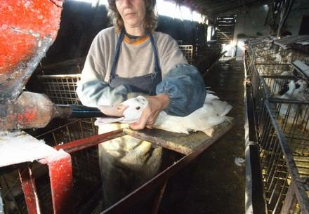 Foie Gras Production in Bulgaria