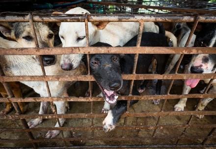 Honden in kooi voor slacht