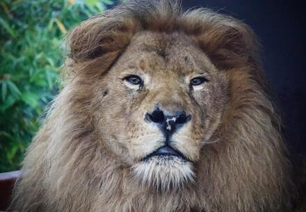 Bobby de leeuw