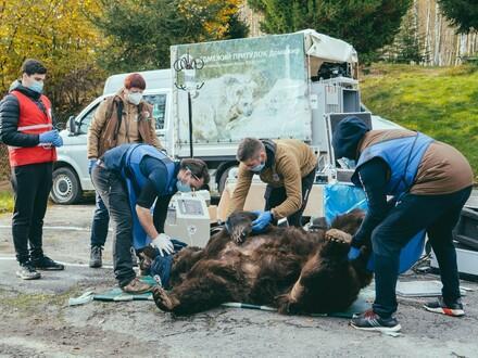Bear Mykhailo