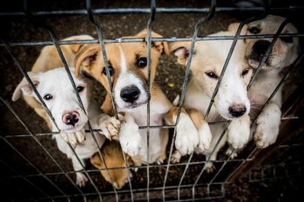 Hunde im Zwinger warten auf Adoption