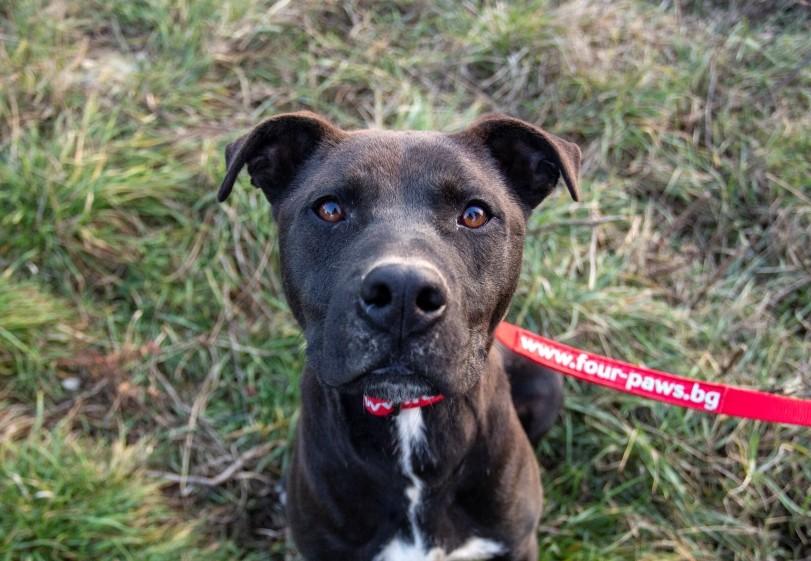 dog-grass-red-leash