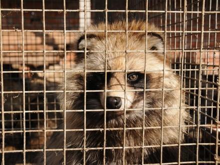 The Cruelty behind Fur