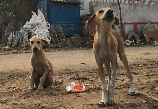 Stray dogs in India after Cyclone 'Fani'