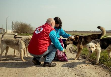 Zwerfhondenzorg in Roemenie