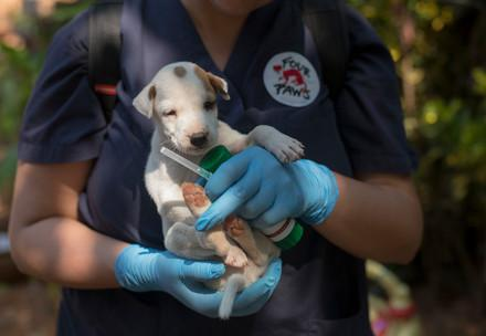 Puppy getting vaccination