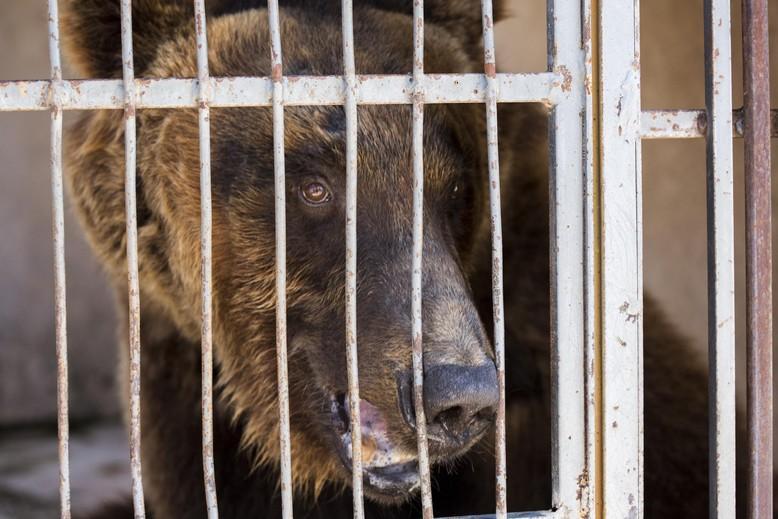 Beirut Bear in Lebanon zoo