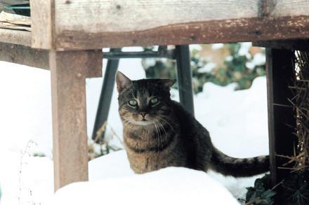 Streunerkatze im Schnee (c) VIER PFOTEN