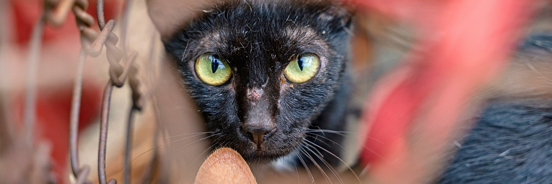 Kat in kattenslachthuis Vietnam