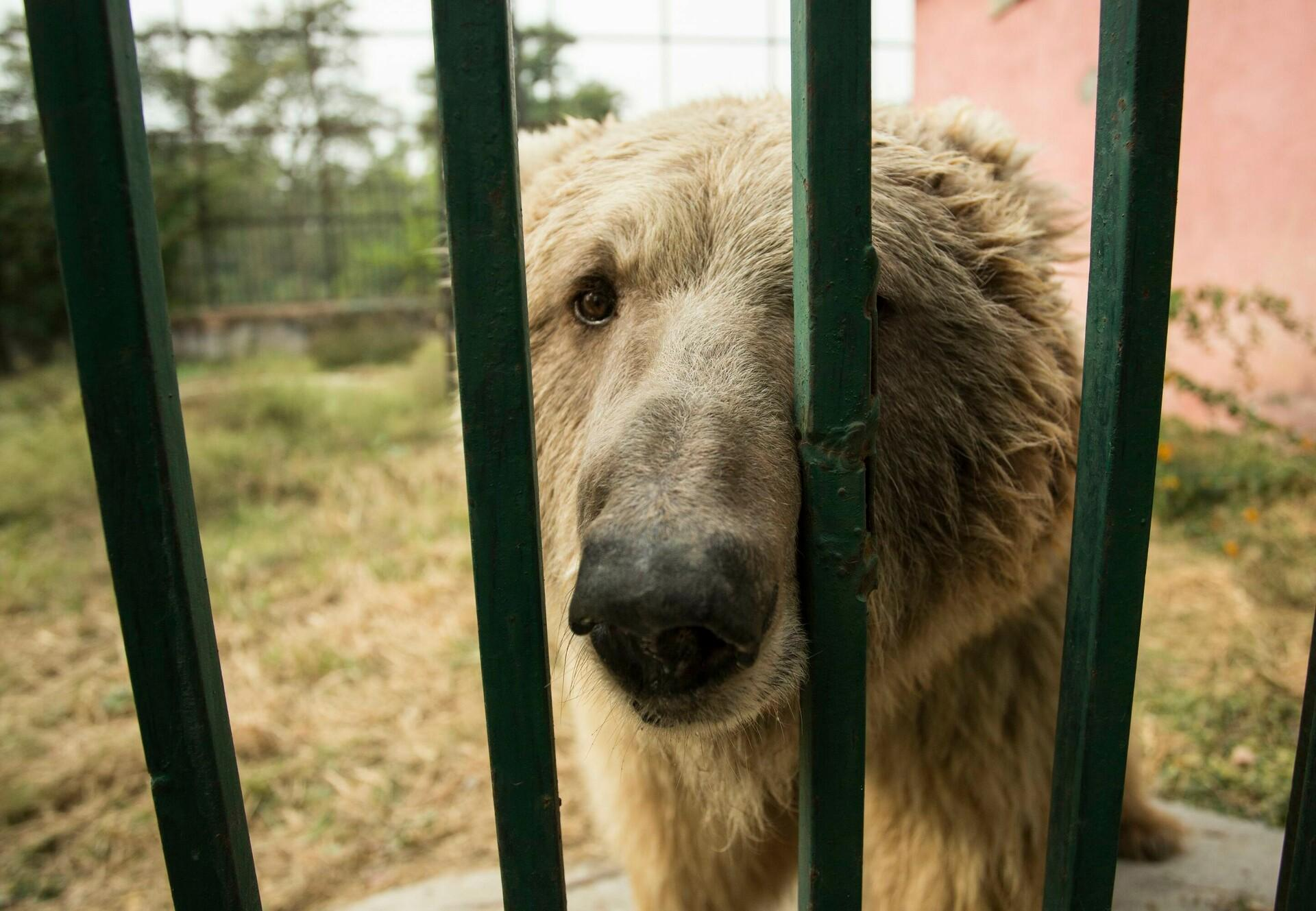 Bear caged in a horrible zoo