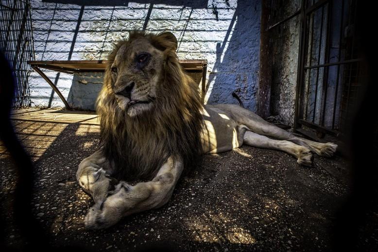 Lenci in Safari Park Zoo Fier