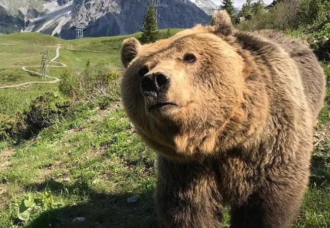 Bear Meimo at Arosa Bear Sanctuary