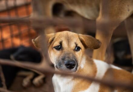 VIER PFOTEN hilft Hunden aus dem Hundefleischhandel in Südostasien