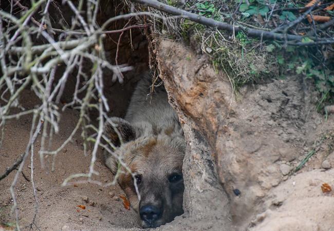 Luna liegt in der Winterhöhle.