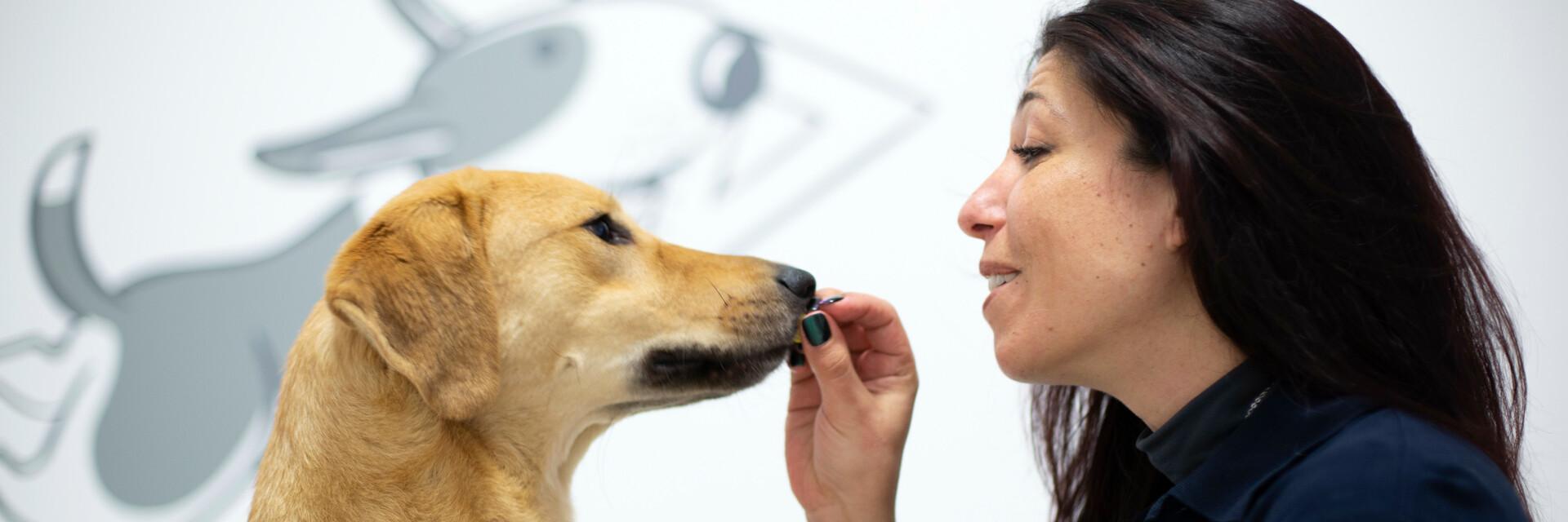woman feeding a dog with a treat