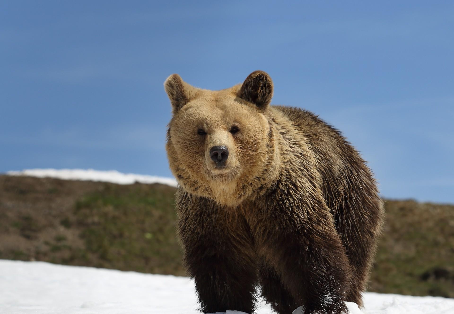 Bears in sanctuary