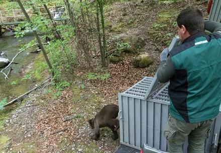 Gerettete Bären werden freigelassen