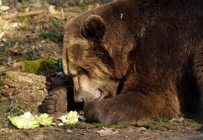 Lothar genießt Salat