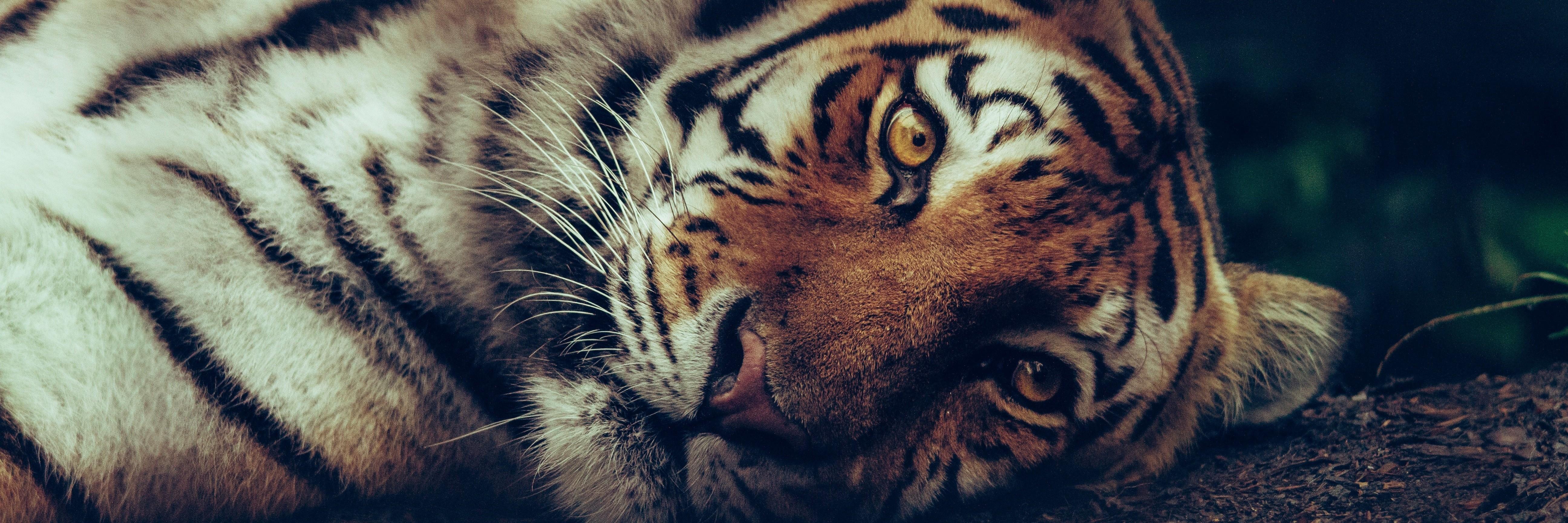 Einsatz gegen Tigerhandel