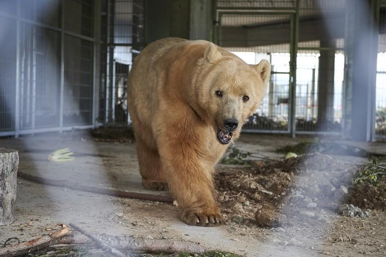 Bear Napa