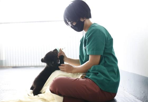 Bear cub Mochi receives veterinary care at FOUR PAWS sanctuary