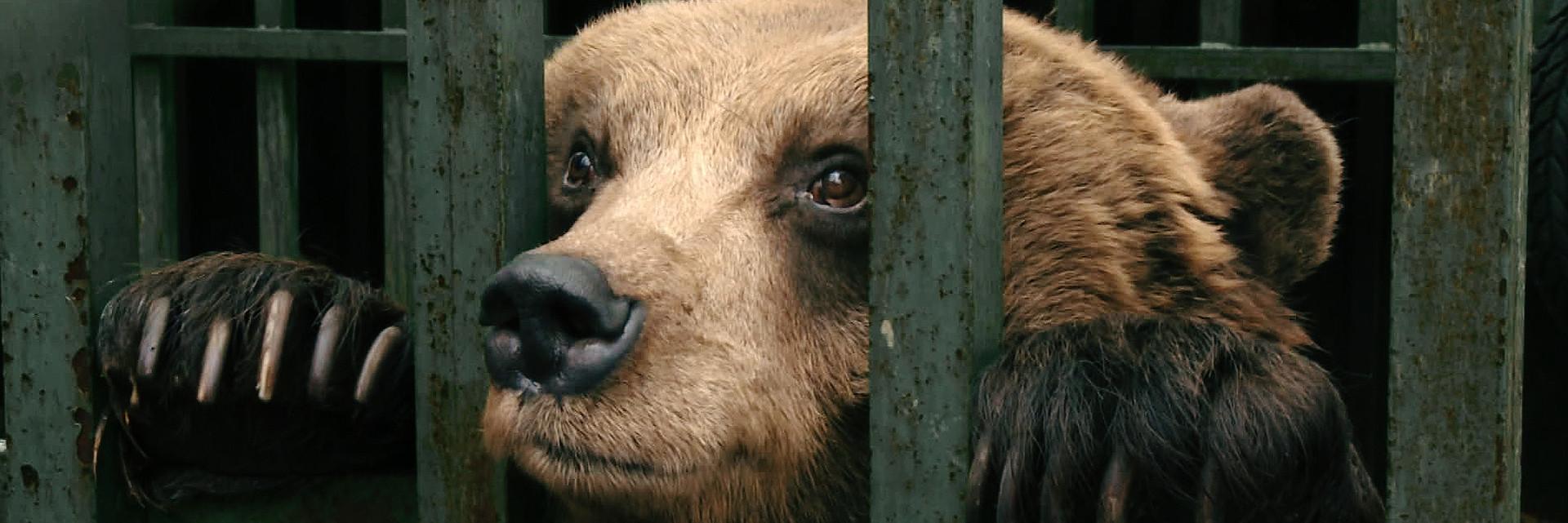SOS Bären
