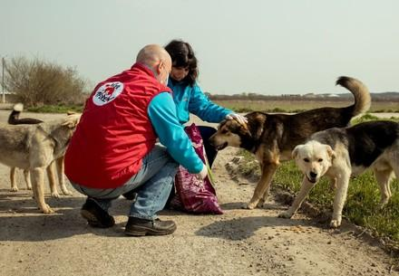 Stray animal care in Romania