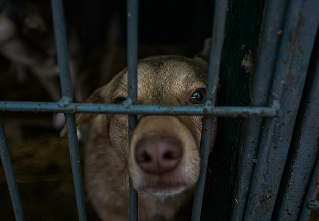 Hund in einem öffentlichen Tierheim von Chisinau, Moldawien