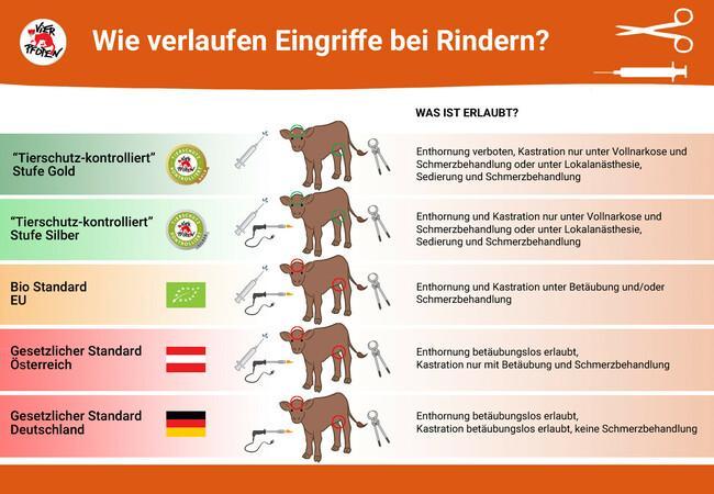 """""""Tierschutz-kontrolliert"""" Wie verlaufen Eingriffe bei Rindern"""