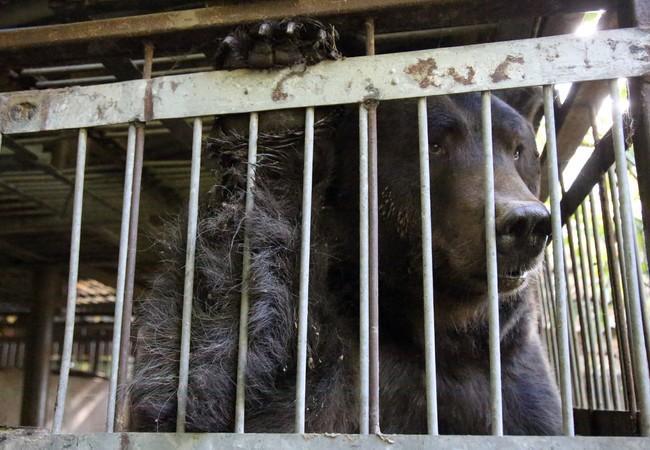 Tyson dans une cage minuscule avant son sauvetage