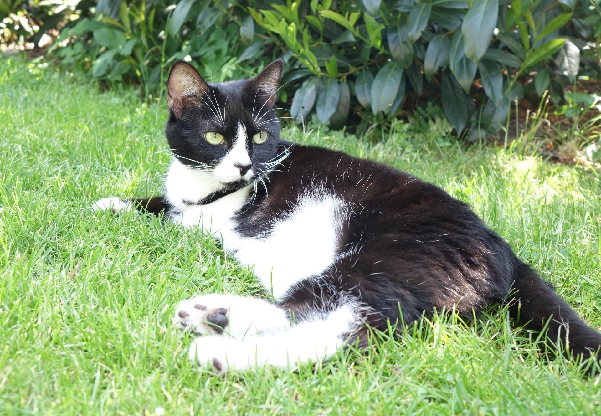 Katze liegt im Gras