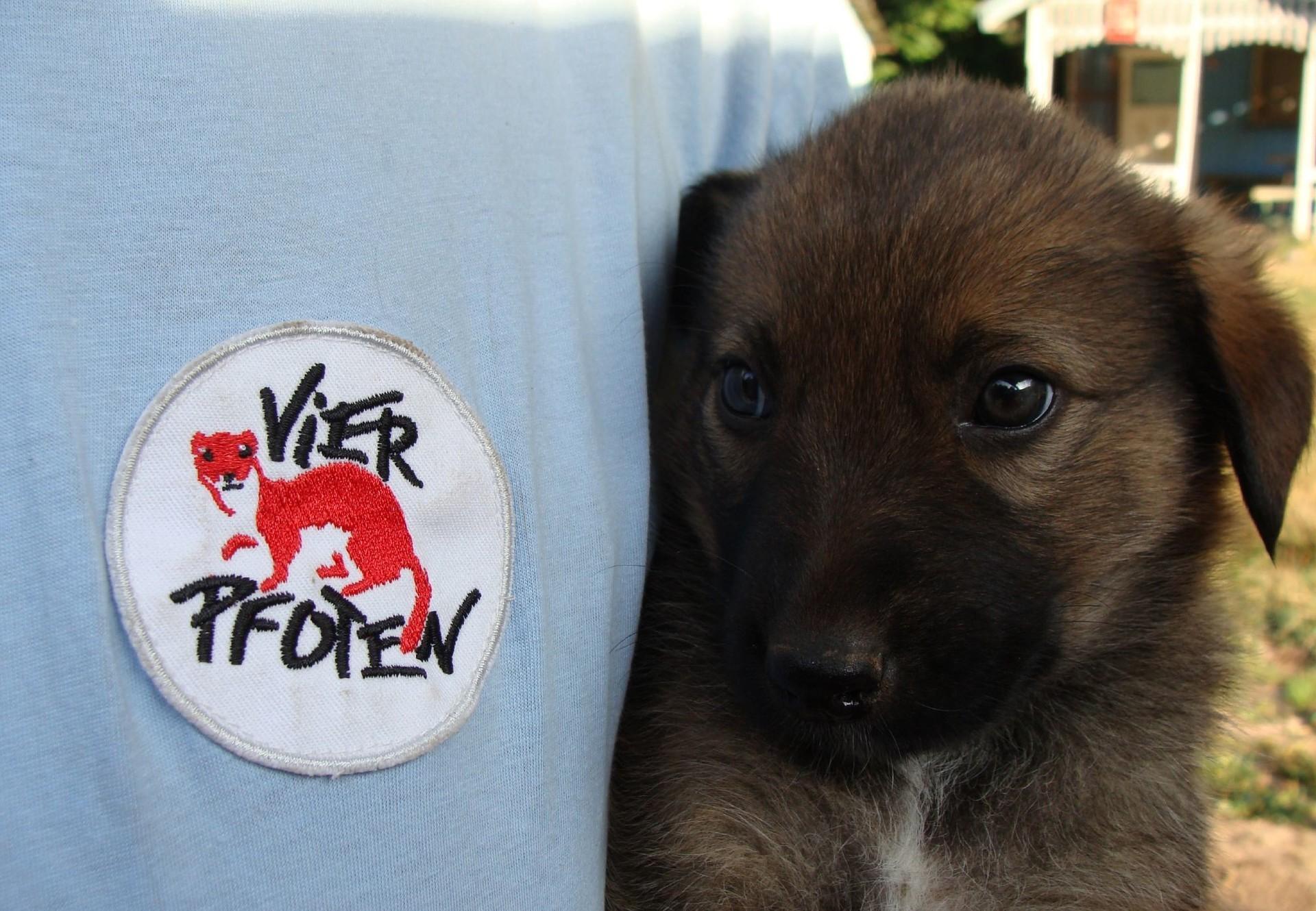 Hundewelpen wurde geimpft im Rahmen eines Projekts in Bulgarien
