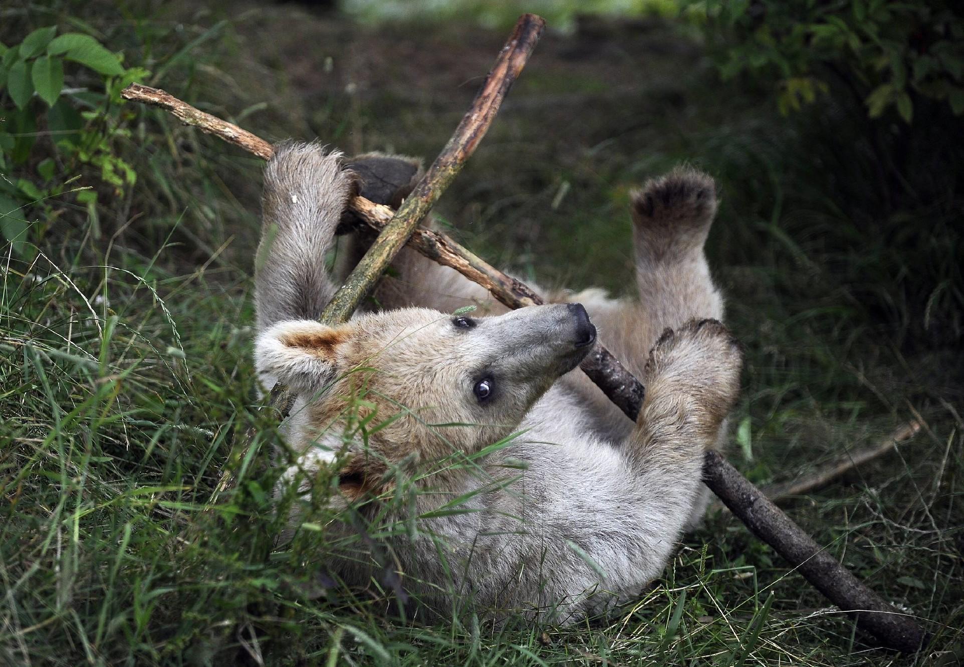 Verspielter Bär