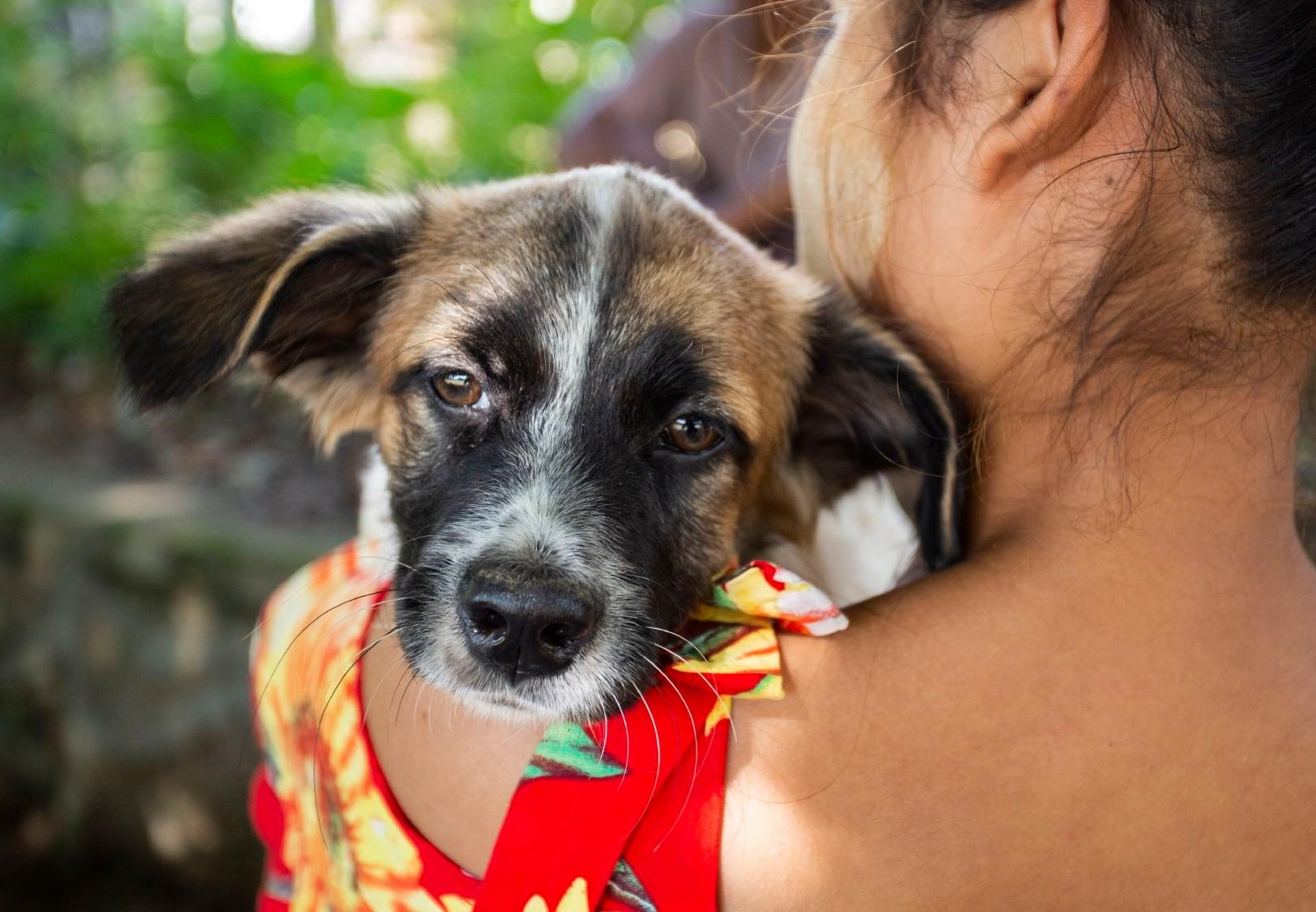 Vaccinated dog in Myanmar