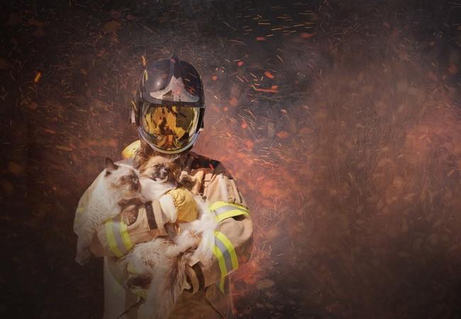 Feuerwehr rettet Hund und Katze aus Flammen