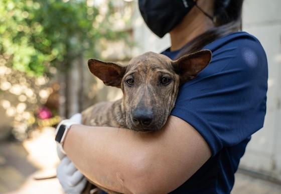 Dog Suzie